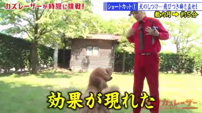 dog-training-jump02